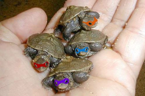 Real_teenage_mutant_ninja_turtles